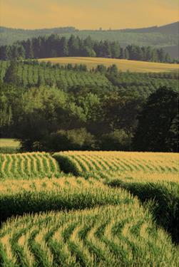 Schwartz - Corn Rows by Don Schwartz