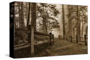 Schwartz - Down the Misty Path by Don Schwartz