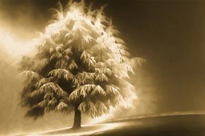 Schwartz - Enlightened Tree by Don Schwartz