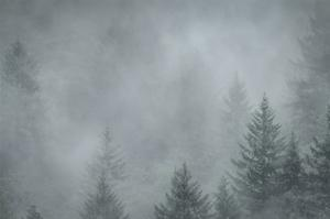 Schwartz - Foggy Pines by Don Schwartz