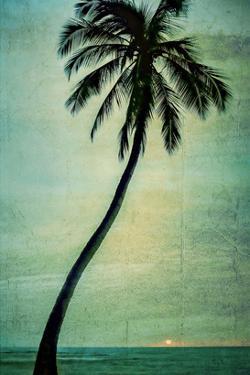 Schwartz - Lone Palm by Don Schwartz