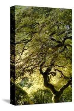 Schwartz - Magical Tree by Don Schwartz