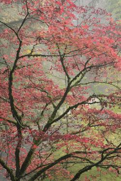 Schwartz - Red Zen by Don Schwartz