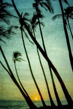 Schwartz - Tilting Palms by Don Schwartz