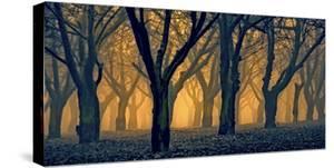 Schwartz - Woods Aglow by Don Schwartz