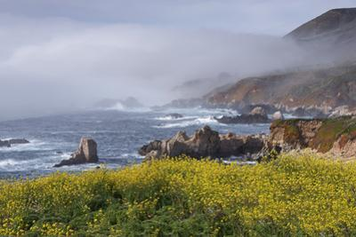 Mustard and Fog at Sobranes Point by Don Smith