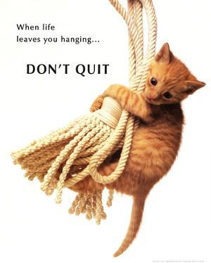 Don't Quit Kitten on Rope