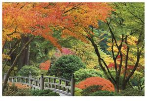 Japanese Garden I by Donald Paulson