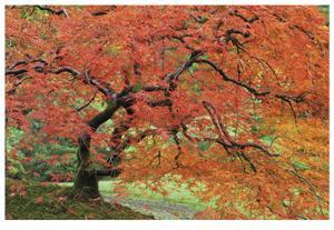 Japanese Garden II by Donald Paulson