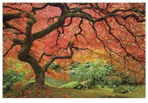 Japanese Maple Tree by Donald Paulson