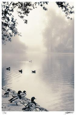 Misty Mallards by Donald Satterlee