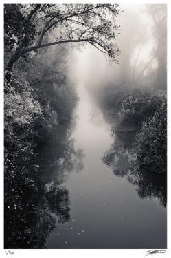 Misty Solitude by Donald Satterlee