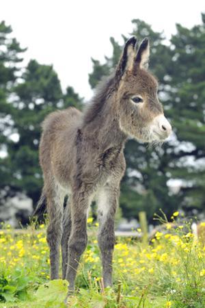Donkey, Baby 5 Days Old