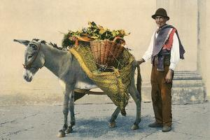 Donkey Carrying Produce