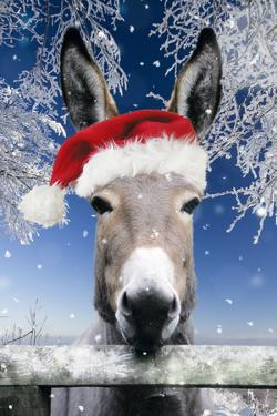 Donkey Looking over Fence Wearing Christmas Hat in Snow