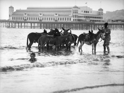 Donkeys in Sea