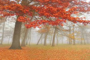 Autumn Mist I by Donna Geissler