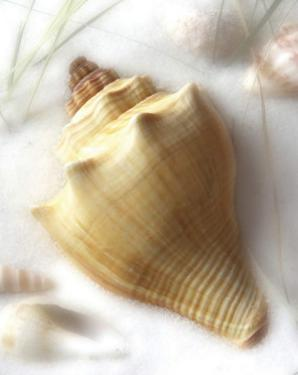 Sand and Shell VI by Donna Geissler