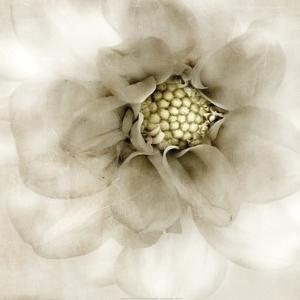 Whisper of Dahlia by Donna Geissler