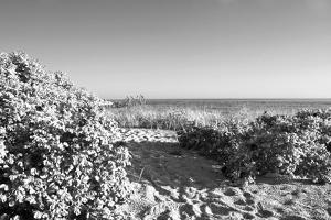 A Scenic Infrared View of Shrubs in Bloom on a State Park Beach on Long Island Sound by Donna O'Meara