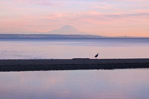 Great Blue Heron, Ardea Herodias, Near Mount Rainier in Seattle by Donna O'Meara