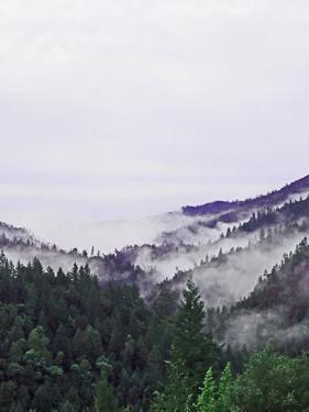 Mount Baker in the Cascade Range, Washington, Usa by Donna O'Meara