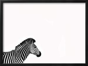 Zebra Isolated by Donvanstaden