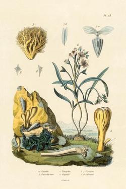 Door Snail, 1833-39