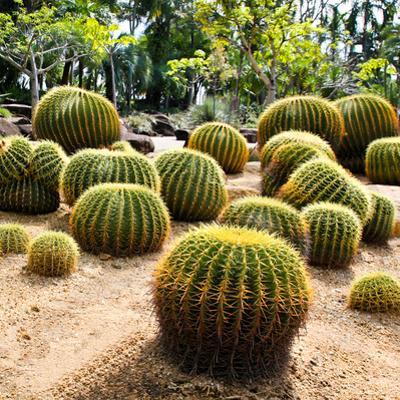 Giant Cactus in Nong Nooch Tropical Botanical Garden, Pattaya, Thailand. by doraclub