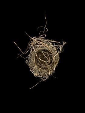 Construction 1: Birds Nest from Above by Doris Mitsch