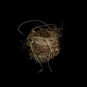 Construction 7: Birds Nest by Doris Mitsch