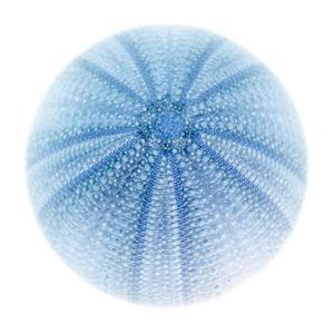 Light 1: Sea Urchin by Doris Mitsch