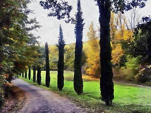 Cypresses In Autumn by Dorothy Berry-Lound