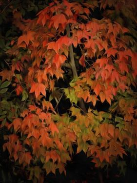 Fall Colours 1 by Dorothy Berry-Lound