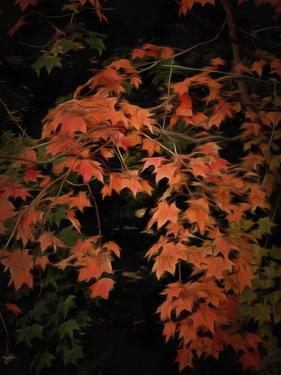 Fall Colours 2 by Dorothy Berry-Lound