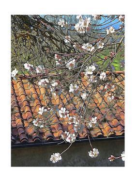 Italian Almond Blossom by Dorothy Berry-Lound