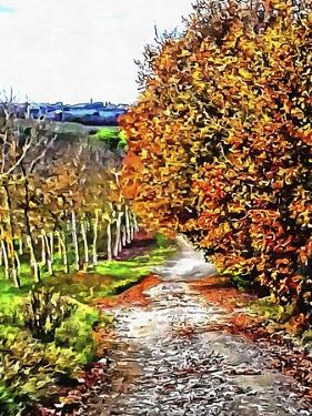 Walnut Avenue In Autumn Umbria by Dorothy Berry-Lound