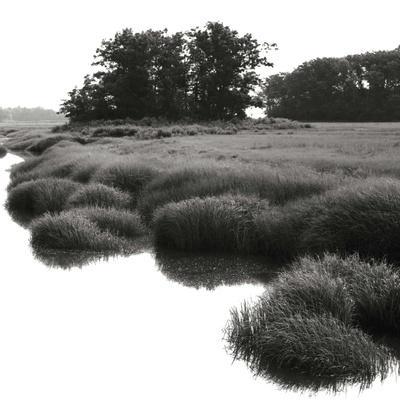 Bright Mist on the Marsh