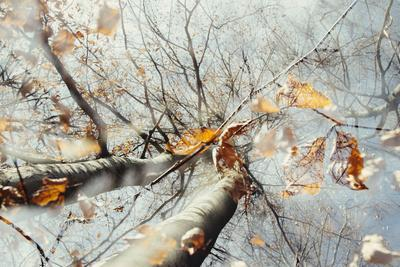 https://imgc.allpostersimages.com/img/posters/double-exposure-beech-falling-leaves-and-blue-heaven-in-the-teutoburg-forest_u-L-Q1EXLZ20.jpg?artPerspective=n