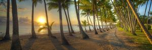 0772 Palm Cove by Doug Cavanah