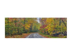 Autumn Road by Doug Cavanah