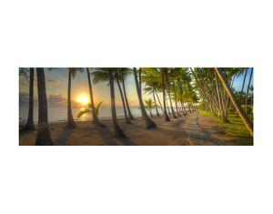Palm Cove by Doug Cavanah