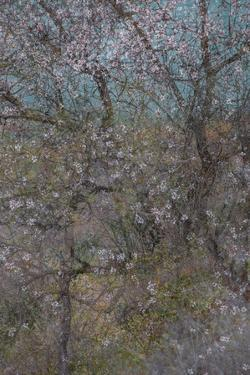 Almond Grove I by Doug Chinnery