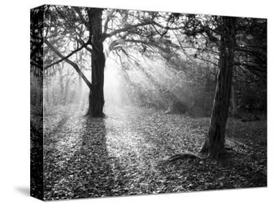 Autumn Burst by Doug Chinnery