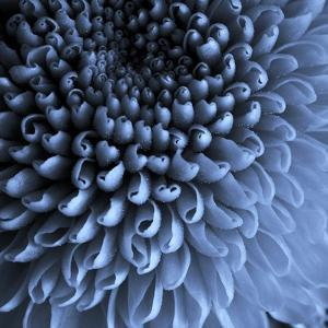 Big Blue by Doug Chinnery