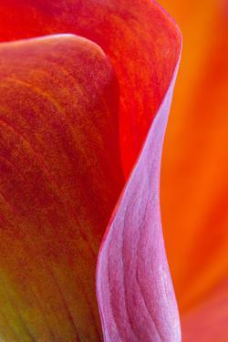 Calla Lily Curves III by Doug Chinnery