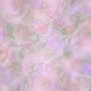 English Rose II by Doug Chinnery