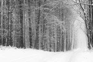 Forest in Winter by Doug Chinnery