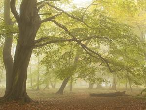 Forest Pale by Doug Chinnery