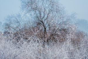Frosty Awakening by Doug Chinnery